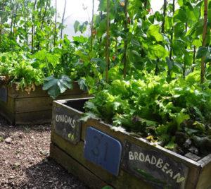 smakelijke tuin